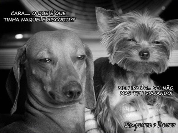 http://empurreoburro.files.wordpress.com/2011/05/0508-drogados.jpg?w=604&h=453
