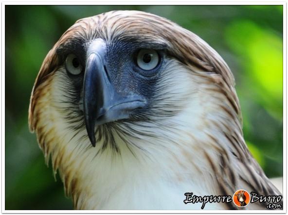 0727-aguia