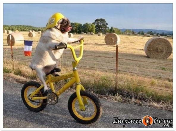 0808-ciclista